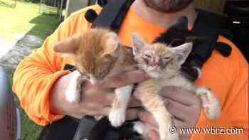 Animals abandoned at construction site of animal shelter - WBRZ
