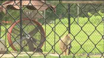 How Zollman Zoo staff help animals cool down in the heat - KTTC