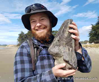 This YouTube Fossil Hunter Has Dug up Thousands of Ancient Animals - Newsweek
