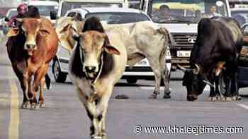 India Covid crisis: Authorities spend Dh75,000 to feed stray animals in Bangalore - Khaleej Times