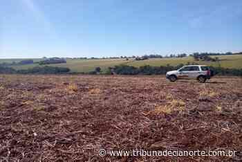 Paraná inicia período do vazio sanitário da soja – Tribuna de Cianorte - Tribuna de Cianorte