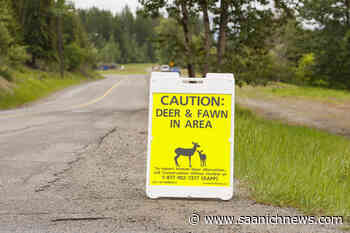 Kimberley woman in hospital after deer attack while out for dog walk – Saanich News - Saanich News