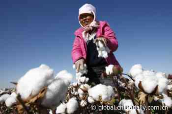 China's consul general rebuts Times' editorial on Xinjiang cotton - Chinadaily USA