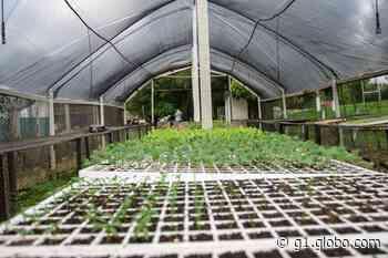 Horto Municipal oferece mudas de diversas espécies de plantas em Saquarema, no RJ - G1