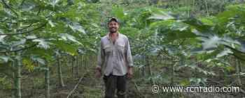 Productor de Papaya del Municipio de Tierralta - USAID - RCN Radio