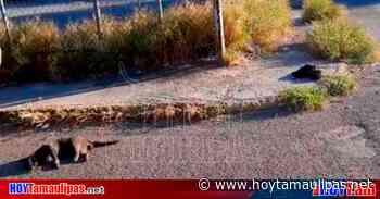 Sin control asesinos de gatos en Ciudad Victoria; Vecinos se dicen hartos - Hoy Tamaulipas