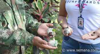 Llovieron 22.000 semillas de árboles nativos sobre Orocué, en Casanare - Semana.com