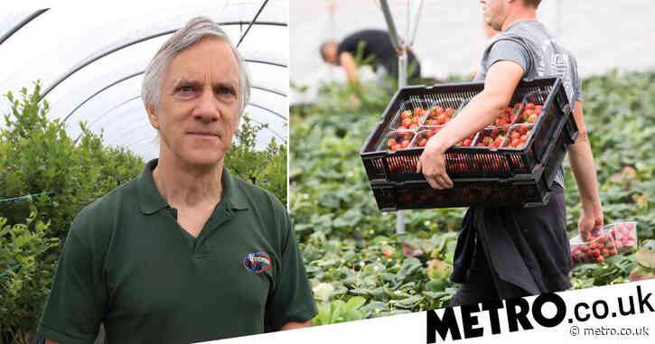 Fruit farming on 'brink of collapse' as Brexit causes shortage of pickers