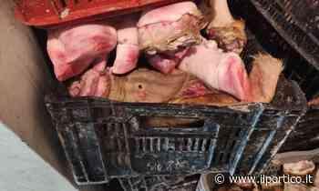 A Pagani sequestrati 500 chili di carne non tracciata: il blitz della forestale di Cava de' Tirreni - Il Portico News