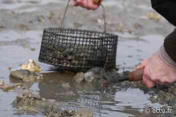 La pêche à pied interdite sur le secteur de Gourmalon, à Pornic - Le Courrier du Pays de Retz