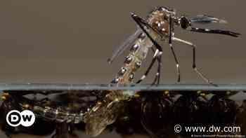 Wolbachia, la bacteria que entrega una luz de esperanza en la lucha contra el dengue - DW (Español)