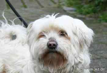 Zahl der Hunde in Krefeld nimmt zu - auch wegen Corona - Westdeutsche Zeitung
