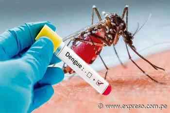 Una bacteria es la esperanza de la lucha contra el dengue - Expreso (Perú)