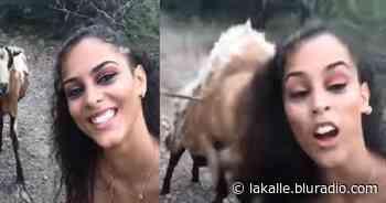 Video: Joven intentó tomarse una selfie con una cabra y el animal la atacó - La Kalle