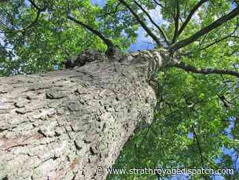 Public engagement on woodlots set to begin - Strathroy Age Dispatch