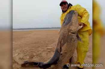 El surubí en Corrientes: ''No fue pescado sino hallado cuando estaba varado con muy poca agua'' - El Litoral