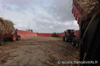 Blocage du port de Pointe-à-Pitre : les cannes de Marie-Galante en souffrance - Guadeloupe la 1ère - Outre-mer la 1ère
