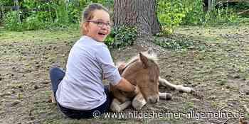 Wie Ponys der achtjährigen Janika aus dem Kreis Hildesheim helfen, sich ins Leben zurück zu kämpfen - www.hildesheimer-allgemeine.de