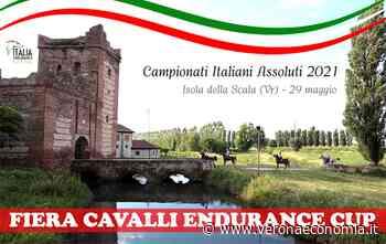 Il mondo equestre, al Palariso di Isola della Scala. Il campionato italiano di endurance 2021, preludio dei Campionati mondiali, previsti nel 2022. - VeronaEconomia.it