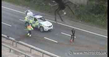 Mind-boggling 'apocalyptic' photo seems to show huge spider dwarfing police car