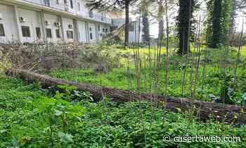 Casagiove, messa in sicurezza di alcuni alberi del parco dell'Abetaia | - CasertaWeb