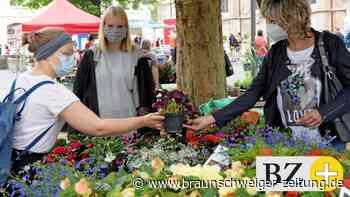Blumen, Farben, Garten, Natur! – Braunschweig lebt wieder auf