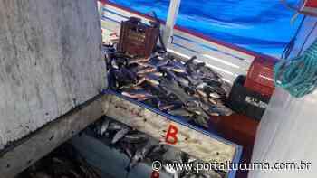 Mais de 300 quilos de pescado ilegal são apreendidos em Coari, no AM - Portal Tucumã