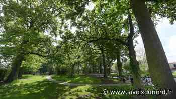 Wormhout: au parc Dehaene, un parasol de verdure déploie son ombre sur un vieux crime - La Voix du Nord