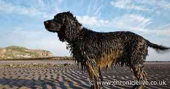 Top tips to keep your dogs safe when heading on staycation