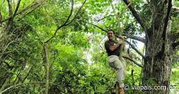 Banco de Bosques logró salvar los lotes de selva Curvas del Urugua-i gracias a pequeñas donaciones - Vía País
