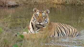 12 Ranchi zoo big cats test negative for coronavirus - Hindustan Times