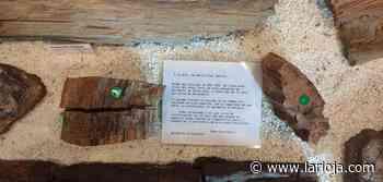 El árbol fósil recupera parte de sus piezas - La Rioja