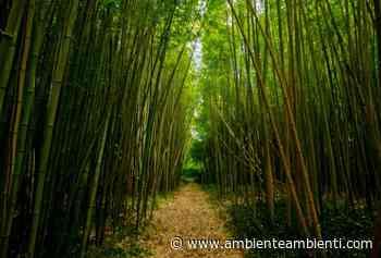A Rovato (BS) il primo cantiere carbon neutrality con il bambù - AmbienteAmbienti