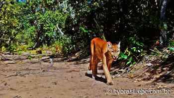 Estação Ecológica da Serra das Araras | Parques do Brasil | TV Brasil | Notícias - EBC