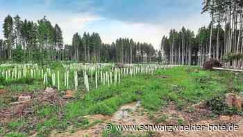 Neues im Bösinger Wald - Eiche führt jeden der 280 Trupps an - Schwarzwälder Bote