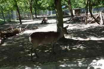 Tierpark Walldorf ab sofort wieder geöffnet - www.wiwa-lokal.de