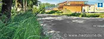 Umwelt: Mehr Einsatz für Artenvielfalt in Friesoythe - Nordwest-Zeitung