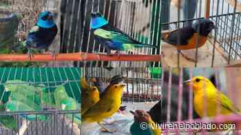 En Medellín rescataron 46 aves víctimas del tráfico de fauna silvestre - Vivir en el poblado