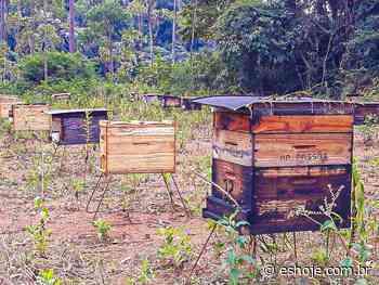 Abelhas vão ajudar produtores de café de Linhares a aumentar a produtividade - ES Hoje