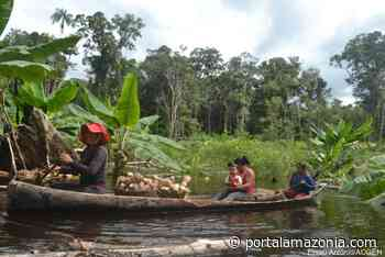 Sem roça, peixe e minhoca: cheia recorde no Rio Negro expõe impacto sistêmico das mudanças climáticas - Portal Amazônia