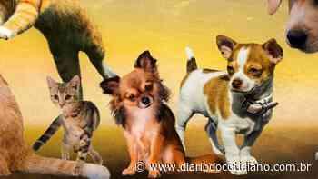 Animais em situação de maus tratos são resgatados em Itapema - Diário do Cotidiano