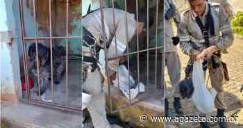 Bombeiros fazem rapel e resgatam cão preso em pedreira em Vila Velha - A Gazeta ES