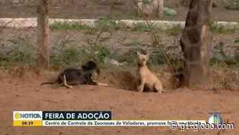 Feira de adoção de animais é realizada em Governador Valadares - G1
