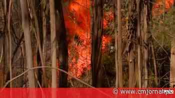 Incendeia em Oliveira do Bairro para ver bombeiros e fica quatro anos e meio na prisão - Vídeos - Correio da Manhã