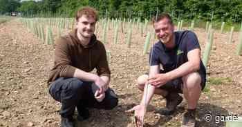 Historische Rebsorten gepflanzt: Weinbau-Premiere bei Obsthof Cremerius in Meckenheim - General-Anzeiger Bonn