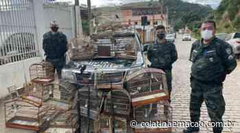Vídeo | Polícia Ambiental apreende armas e animais silvestres em Ecoporanga - Colatina em Ação