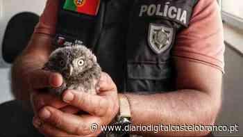PSP de Castelo Branco resgata mocho-galego caído no chão em Castelo Branco - Diário Digital Castelo Branco