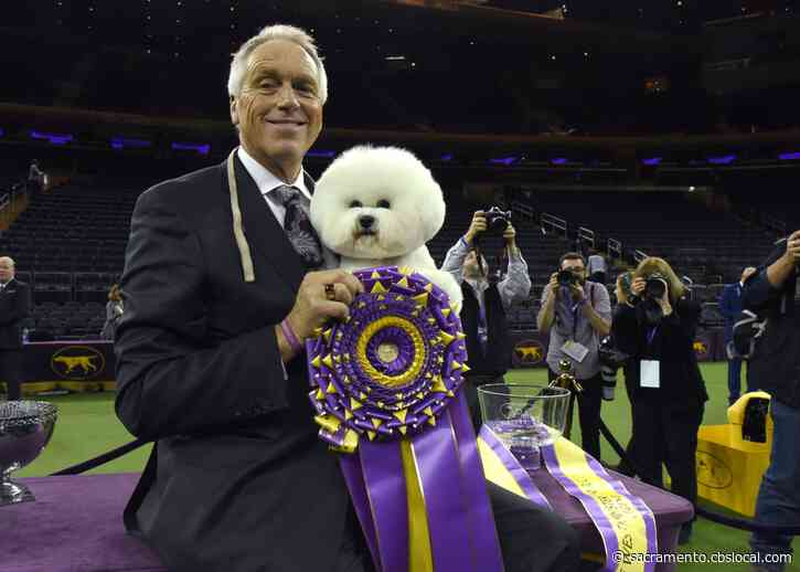 Star Dog Handler From Acampo Hurt In Wreck En Route To Westminster Show