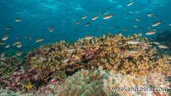 Panamá creó una reserva marina casi tan grande como su territorio - Weekend