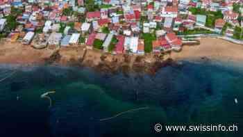 Mancha oleosa invade las costas de isla Taboga en Panamá - swissinfo.ch